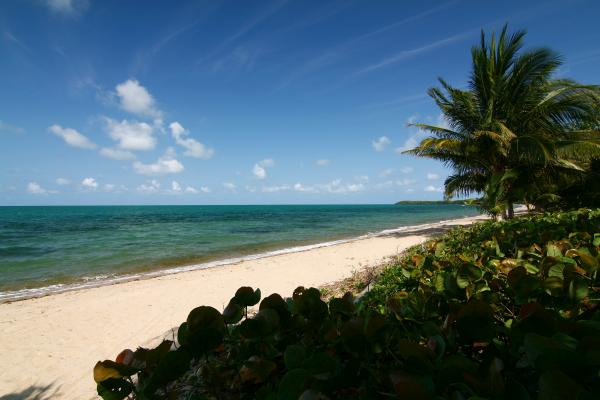 almond beach belize wikimedia free
