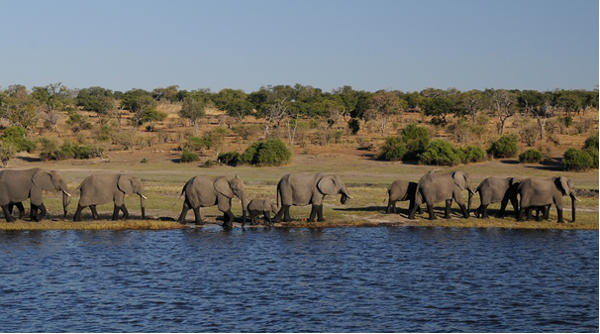 elephants at waterside - https://pixabay.com/en/elephant-africa-river-botswana-1653016/